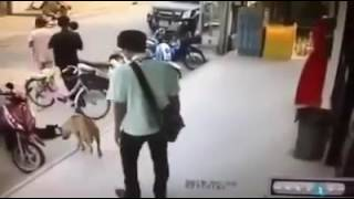 'Akibat Kurang Ajar Dengan Anjing' Ambik Kau!! Lawak Bo-doh
