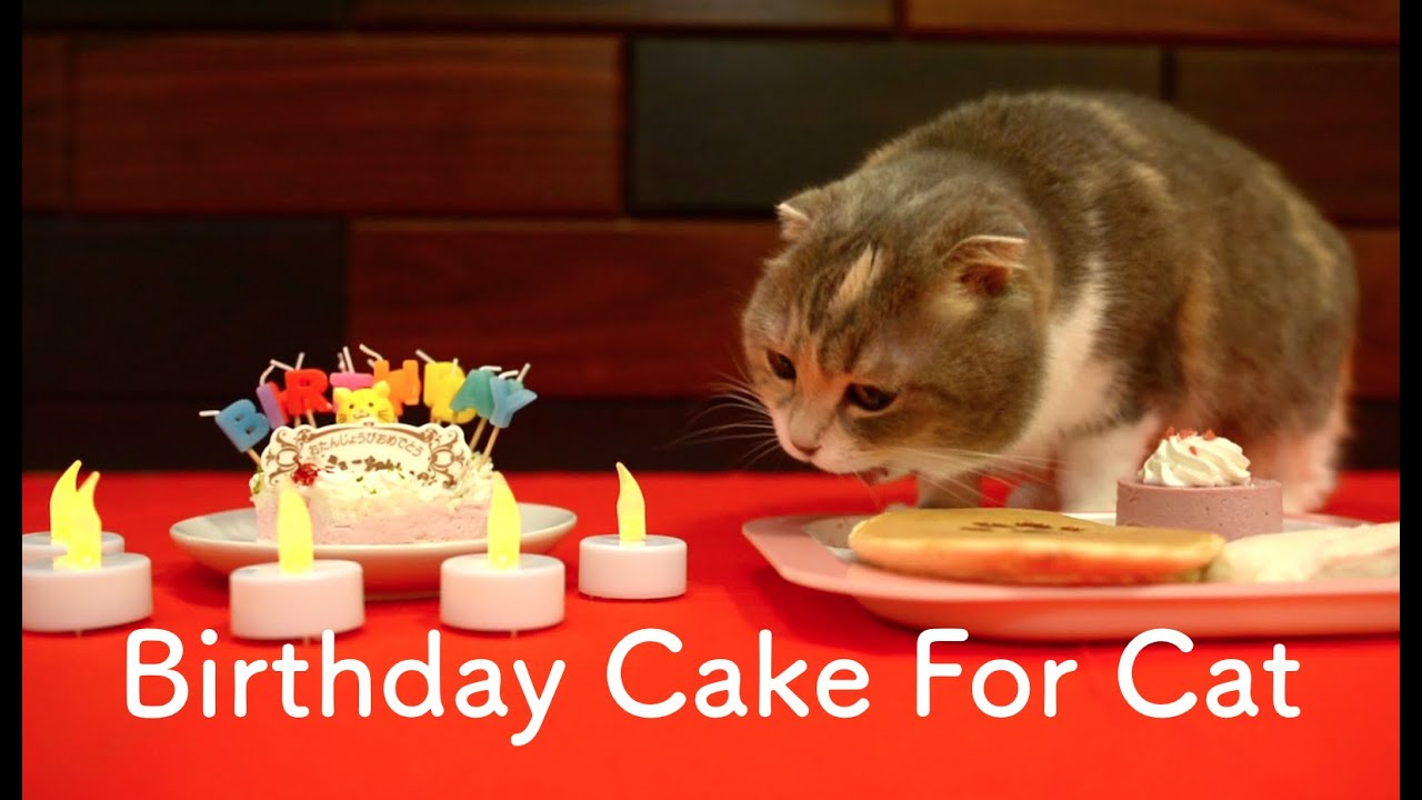 Cats Eating Birthday Cake For Pet Youtube