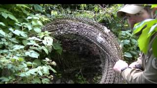 Sapper Lessons: Counter Mobility - Concertina Wire