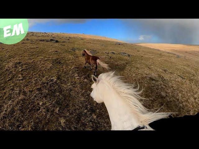 A Reinless Ride across Bodmin Moor