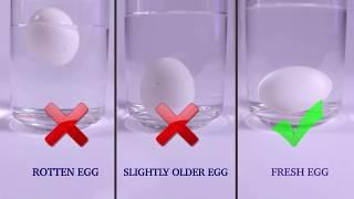 Testing Eggs for Good Quality (Test 1) | FSSAI
