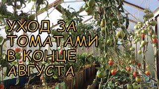 Уход за ТОМАТАМИ в конце АВГУСТА(Поговорим об уходе за томатами в теплице в конце лета (в августе) - начале осени. Вторая половина августа..., 2014-08-27T08:09:58.000Z)