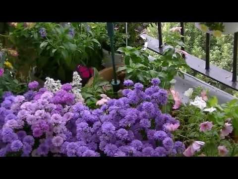 ゆめかわいい♡ソーラー蝶々⑯ Solar  Butterfly 16  ベートーヴェン・ピアノ・ソナタ第16番ト長調