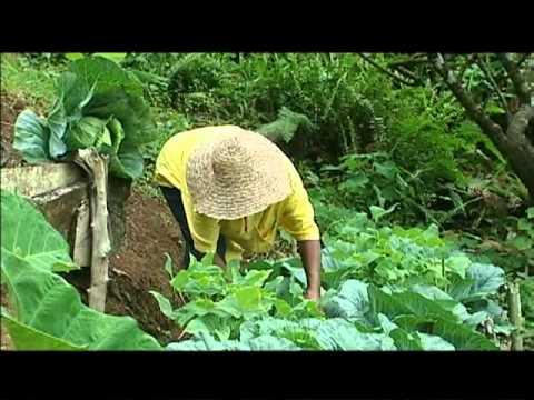 I Am Dominica - Organic Farmer - Roy Ormond