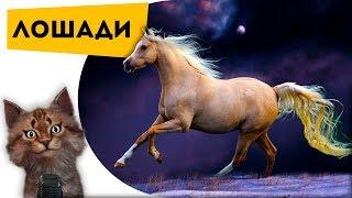 Лошади | Самые интересные факты про животных для детей | Познаватель кот Семен Ученый