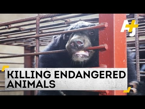Killing Endangered Animals: A Lawless Border Town Where Trade Is Thriving