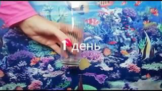 Как правильно пить воду СЕКРЕТ КИТАЙСКОЙ ДИЕТЫ