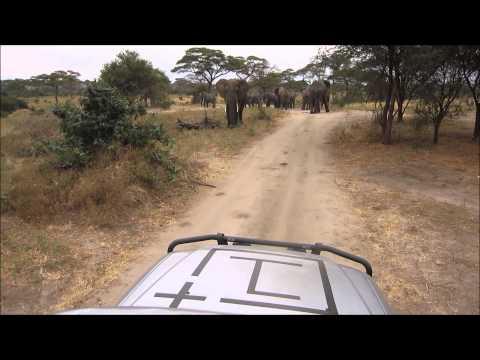 OnePlus Africa Edition