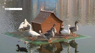 Хулиганы забили до смерти утку на озере Щорса в Якутске