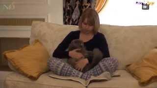 Cats&DogsTV - УДИВИТЕЛЬНЫЙ МИР КОШЕК - КОШКА ХАЙЛЕНД ФОЛД МУСЯ И ДЕВОЧКА МАРТА / HIGHLAND FOLD CAT