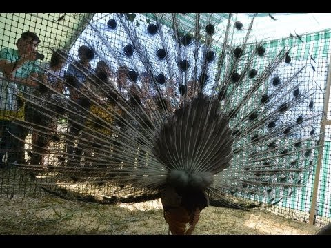 Ким Кардашьян вид сзади 32 Фото Триникси