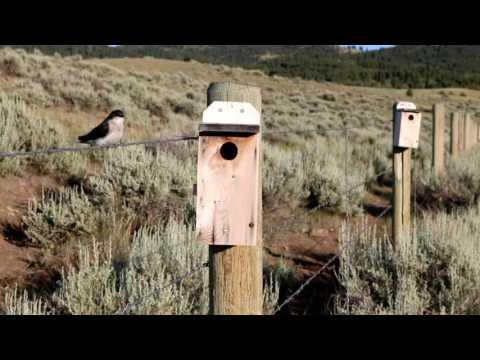Ringing Rocks Montana Youtube