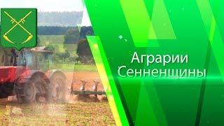 Аграрии Сенненщины 2017. Фильм о тружениках села Сенно 2017