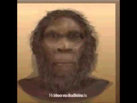 6 mil years in 60 seconds - Rough Chonological Timeline of Hominin Lineage (Bipedal Apes)