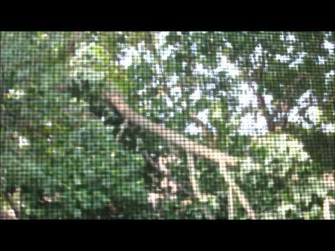 TREE DOWN IN YARD