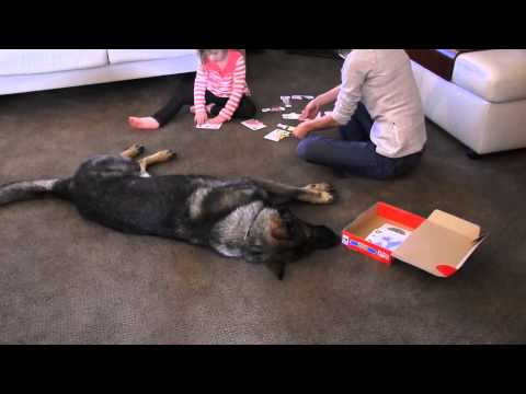 Best Family and Home Protection Trained German Shepherds