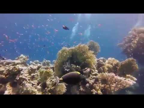 Reef oasis dive club ras nasrani melia sharm by gabor - Reef oasis dive club ...
