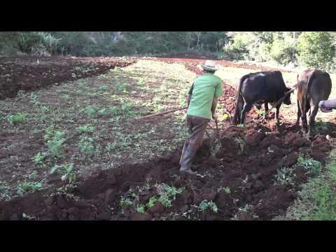 Traditional Farmers in Cuba