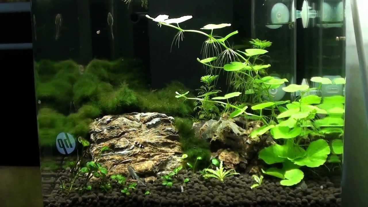 15 liter nano shrimp tank 19 3 2012 youtube. Black Bedroom Furniture Sets. Home Design Ideas