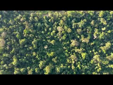 A história do pirarucu do médio Juruá. Carauari Amazonas