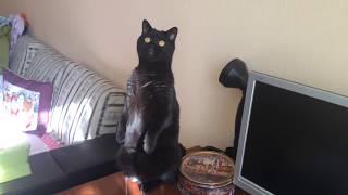 Funny cats / смешное видео про кошек/ смешные кошки приколы