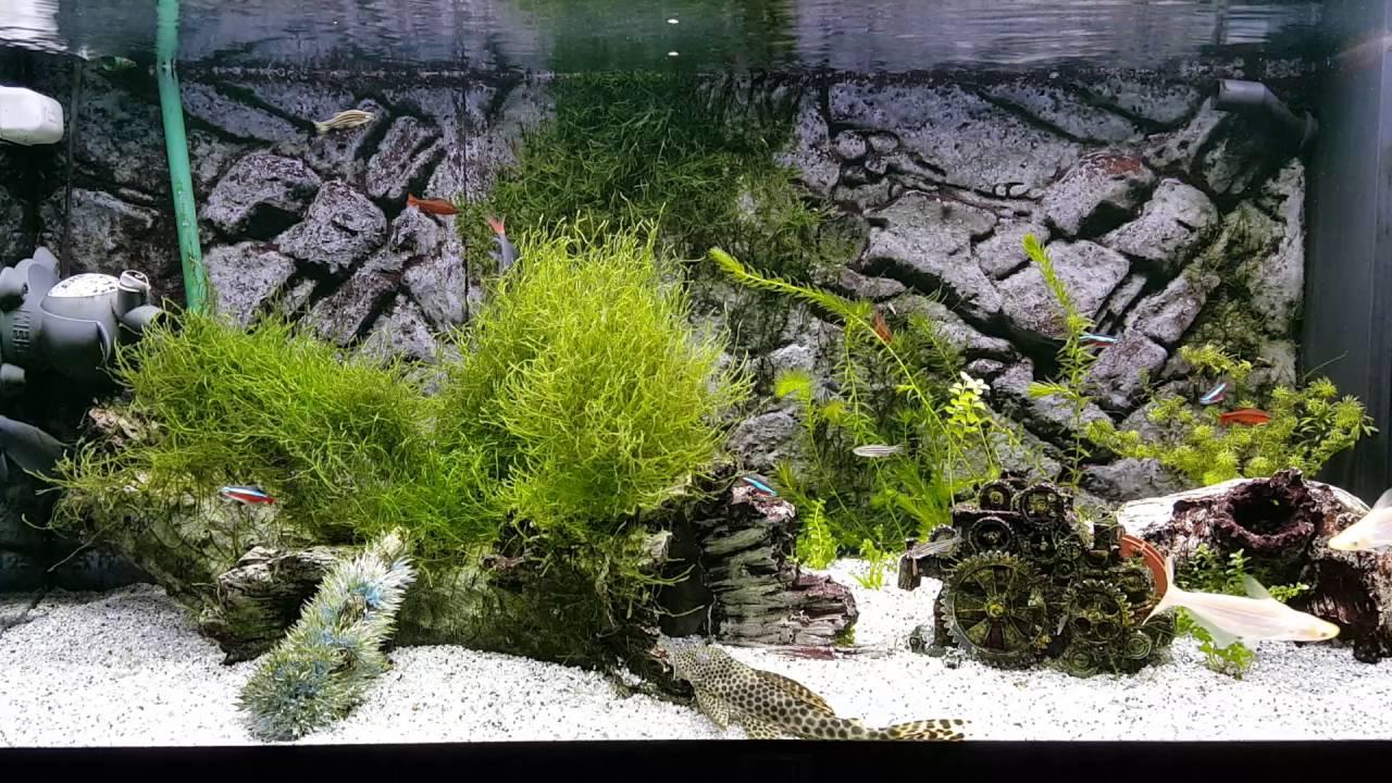 Aquarium led verlichting Juwel Rio 180 - YouTube