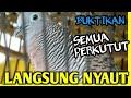 Perkutut Lokal Gacor Jago Memancing Lawan Sangkil Suara Burung Perkutut Lokal  Mp3 - Mp4 Download