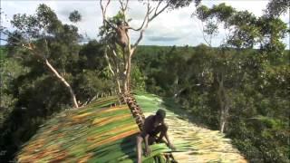 Korowai Tribe - Papua New Guinea (BBC Human Nature; Jungles)