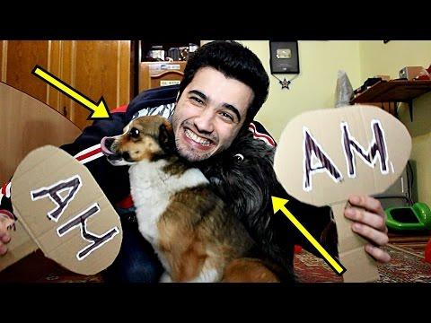 "PROVOCAREA ""AM/N-AM"" CU CÂINII MEI (Bruno si Taz) #2"