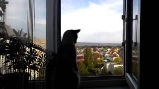 Кот на подоконнике/The cat on the windowsill