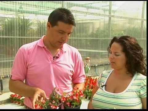 El jardinero en casa fucsias doovi - El jardinero en casa ...