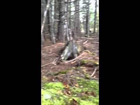 لقطات مخيفه تثير الرعب في كندا للأرض وهيا تتنفس مثل البشر ، فيديو