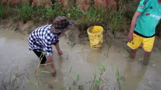 beautiful girl fishing cambodia net fishing to catch huge fish