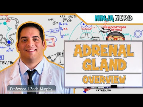 Endocrinology | Adrenal Gland Overview