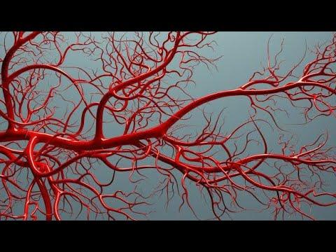 Ангиогенез как фактор развития рака.