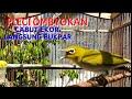 Pleci Pancingan Agar Plecimu Ikut Bunyi  Mp3 - Mp4 Download