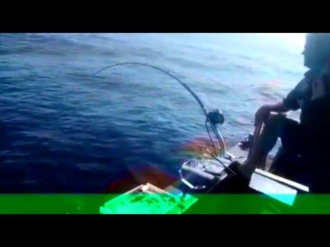 Blue nose caught offshore (Durban)