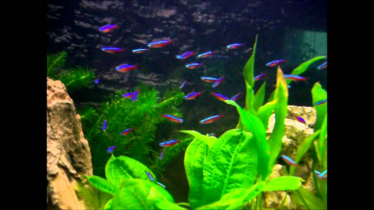 Roter neon aquarium 112liter silly battalion d 39 amour youtube for Neon aquarium