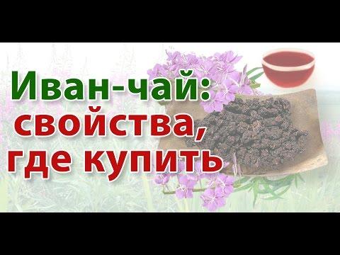 Иван-чай: свойства, где купить Иван чай