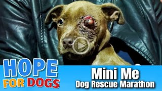 Hope For Paws Save One Eyed Puppy - Stray Paws Dog Rescue Marathon