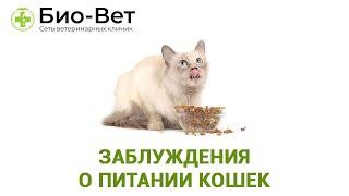 Заблуждения О Питании Кошек & Рацион Питания Кошек. Ветклиника Био-Вет