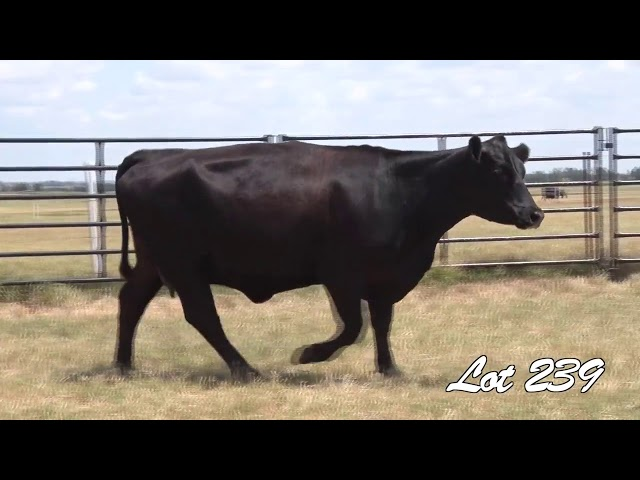 Pollard Farms Lot 239