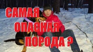 РОТВЕЙЛЕР В ЯРОСТИ !!!!! Опасная порода собак..