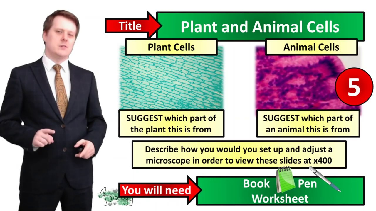 Animal and Plant Cells - Biology - Key Stage 3 - Mr ...