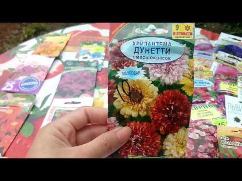 Садовые цветы. Как выглядят семена цветов.