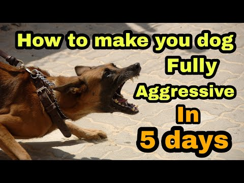 how-to-make-my-dog-fully-aggressive-in-five-days