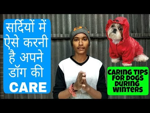 How to take care of dogs during winter season (Hindi) | Pet care |