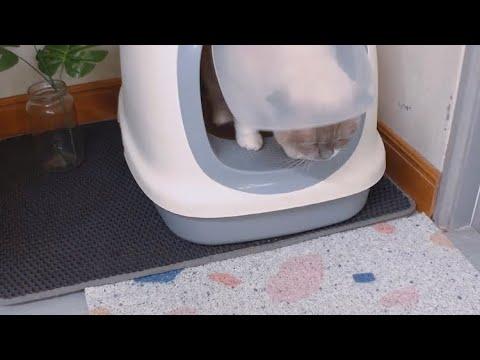 พรมดักทรายแมว   ชิเอลแมวมึน