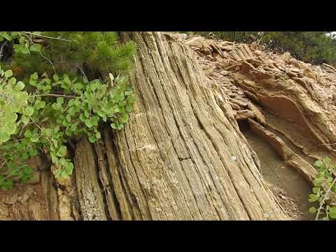 The original forest on flat earth part 12, Tree rings and Gold Mining thumbnail