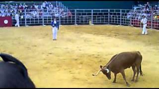 Corrida de toros en Sabres: